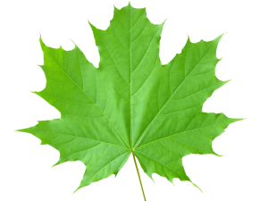 green_leaves_PNG3678
