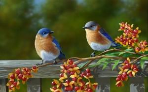 beautiful-birds_1592536